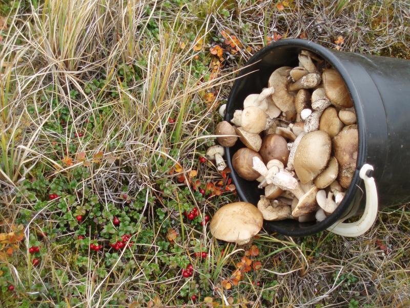 фото с грибы белоруссии