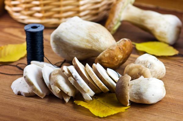 Как солить белые грибы на зиму